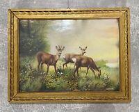 !!NEU!!TOP!!OVP! Eiche 2 5 Stück Trophäenschilder für Rehbock 22x13cm dunkel