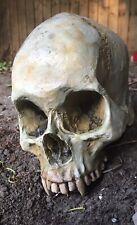 More details for vampire skull prop
