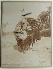PHOTO Maghreb Afrique du nord chameau avec palanquin 28x22 AFR9