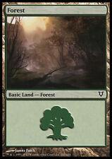 MTG FOREST FOIL! - FORESTA EDIZIONE CASUALE