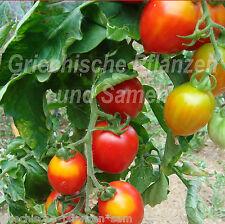 MAIGLÖCKCHEN Tomate pomodori di pannocchie conveniente 10 Samen