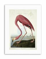 Audubon American Flamingo Canvas Art Print