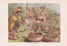 Brillenschlange Südasiatische Kobra Naja naja Lithographie von 1890