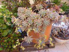 grand lot de BOUTURES plantes façiles a vivre +feuilles de laurier ,sauce,bouill