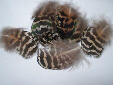 lot de 10 plumes paon 6 a 8 cm