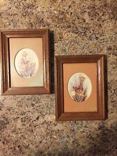 Vintage Matted Butterfly Prints In Wormwood Frames - Set Of Two