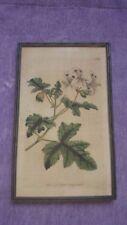 Dealer or Reseller Listed Engraving Botanical Art Prints