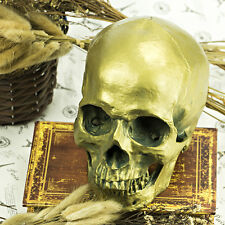 Halloween Antique Bronze 1 1 Life Size Resin Human Head Skull Anatomical Model