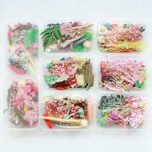 Real Pressed Flower Leaf Dried Daisy Flower Resin Flower Dry Beauty Nail Art