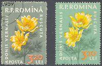 RUMÄNIEN 1959 Einheimische Flora Adonisröschen 3,20 L gest. ABART FEHLENDE FARBE