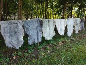 Real Nordschnucken Sheep Skins Sheepskin Natural Grey Many Sizes 2.Wahl