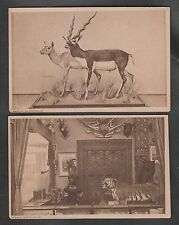 INDIA PATIALA STATE 1924 TUCK's PICTURE POSTCARDS BLACK BUCK, COURT 4 DIFFERENT.
