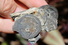 Chinese 6 bronze coins in clump, salvaged from Song Dynasty 1200AD shipwreck