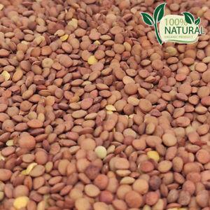 Brown Organic Red Lentils Food Tasty Madras Non-Gmo Kosher Whole Israel Quality