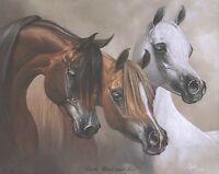 16x20 GICLEE BAY GRAY CHESTNUT stallion mare arabian horse art print SHIVAK EWF