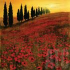 """30W""""x30H"""" POPPIES by STEVE THOMS - FIELDS FLORAL HILLSIDE TREES SUNSET CANVAS"""