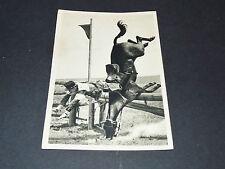 LOS ANGELES 1932 J.O. OLYMPIC GAMES OLYMPIA PENTATHLON IMRE PETNEHAZY MAGYAR