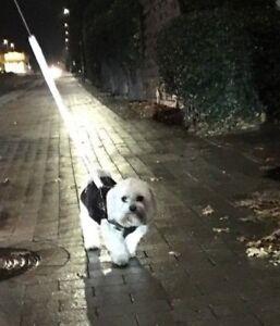 Reflektierende LEINENSOCKE für Hundeleine Reflektorband Leuchtleine Reflexion