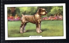 Gallaher Dogs 2nd Series 1938 - Schnauzer No. 38