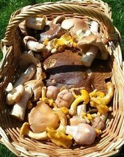 STEINPILZE MISCHUNG Waldpilze 200g getrocknete Mischpilze 5 vers. Pilzsorten