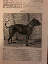 1886 Toy Dogs English Toy Terrier English Pug Mexican Hairless Japanese Pug