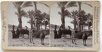 Egitto Oasis Sakkarah Foto Stereo Stereoview N° L9 Vintage Albumina 1896