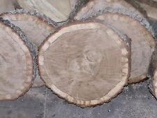 5 Baumscheiben, Holzscheibe, 25 x 2 cm, Eiche