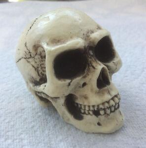 Made in USA Skull Skeleton head Knob goth punk 30