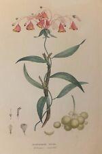 """""""Alstroemeria Edulis"""", planche de """"La Flore des Antilles"""" de Tussac, 1808"""