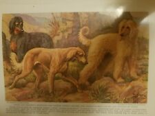 Eh Miner Afghan Hound & Saluki bookplate 1937 National Geographic Magazine