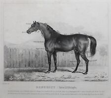 1831 ANTIQUE FARRIER HORSE PRINT ~ BENEDICT (LATE LORD FOLEY'S)