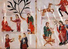FAKS. St. 59-Medicina Antiqua = CODEX VINDOBONENSIS 93 nom féminin cuisants astula Regia