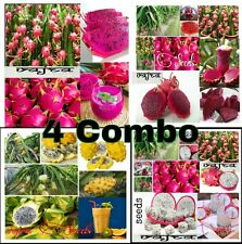Super Combo Pack 4 Variety Mixed Bonsai Dragon Pitaya Fruits Seeds 20 Pcs Packet