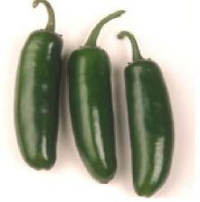 Pepper Hot Jalapeno Major League Hybrid Treated (Capsicum Annuum) 10 Seeds