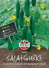 "Sperli - Salatgurke "" Lothar "" robuste Mini Gurke / für Kübel geeignet 80861"