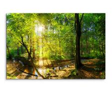 Deko-Bilder & -Drucke auf Leinwand mit Fotografie mit Wald