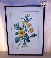 Antique Litho Print-Souci des Jardins Calendula-Van Spaendonck-Le Grand-1801