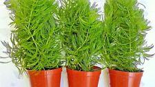 Lote De Acuario 20 Plantas de Acuario
