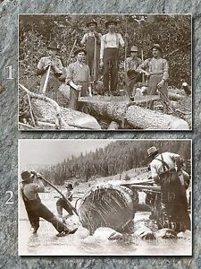 Logging photos lot, 2 8x12 prints, 1910-1940s loggers log rollers timber cutters