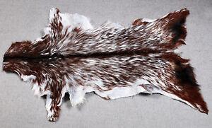 GOAT Western taxidermy Hide Rug Natural Pattern Fur Goat Hide Rode SA-4954