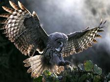 Barn Owl ~ Birds ~ Counted Cross Stitch Pattern
