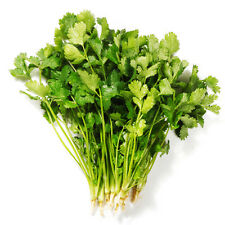 Four Seasons Coriander Seed 150 Seeds Coriandrum Sativum Caraway Vegetable D011