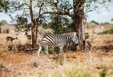 7x5ft Vinyl Photo Background Zebra Studio Wildlife Photography Backdrop