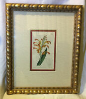 Antique Hand Colored Etching 1809 Curtis Botanical Garden Flower Framed Fine Art