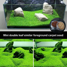 aquarium tank mini double leaf similar foreground carpet water plants seed