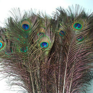 10PCS Fake Big Eyes Peacock Feathers for DIY jewelry making Decorative Feather