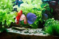 4 Wasserpflanzen (4,98€/Stk) Diskus Set, robuste Arten im Topf, Aquarienpflanzen