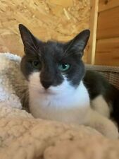 Please help sponsor Lucy at Sandbach Animal Rescue