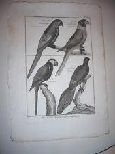 GRAVURE 1791 OISEAUX PERROQUET ARA ROUGE PERRUCHE