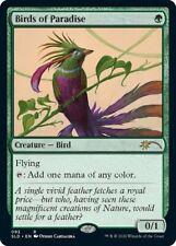 1x MTG Secret Lair Drop Series Birds of Paradise, NM-Mint, English
